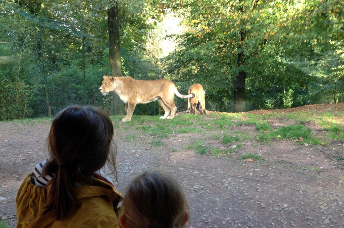 Zoo jurques 1