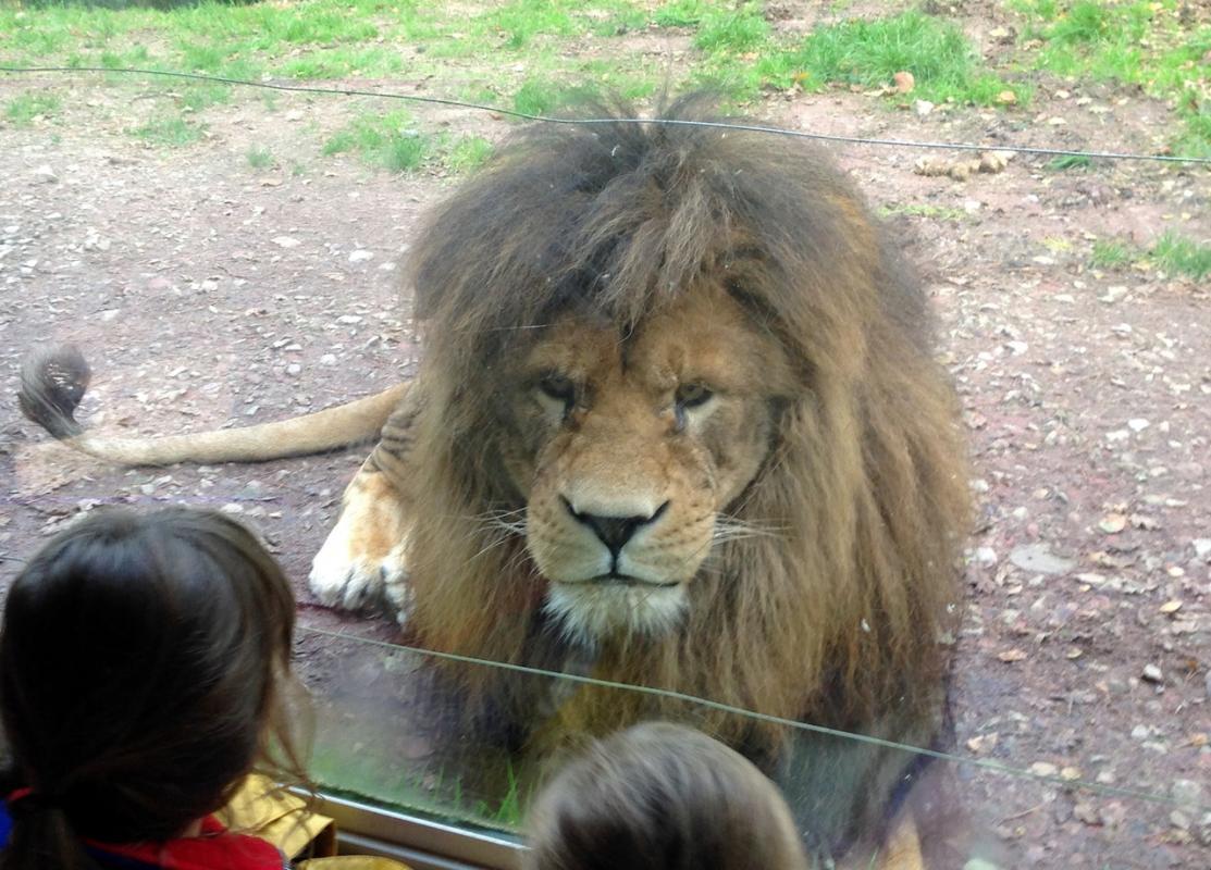 Zoo jurques1